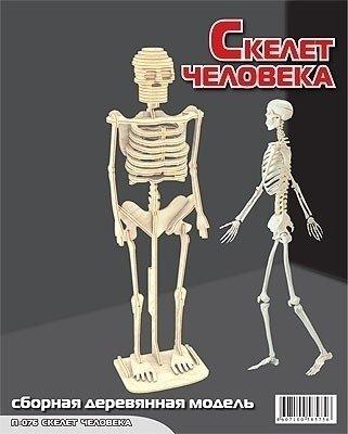 Сборная модель Скелет человека